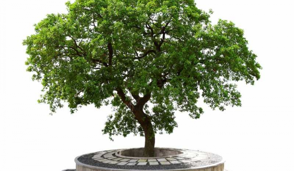 Cenizarios en árbol La Ofrenda